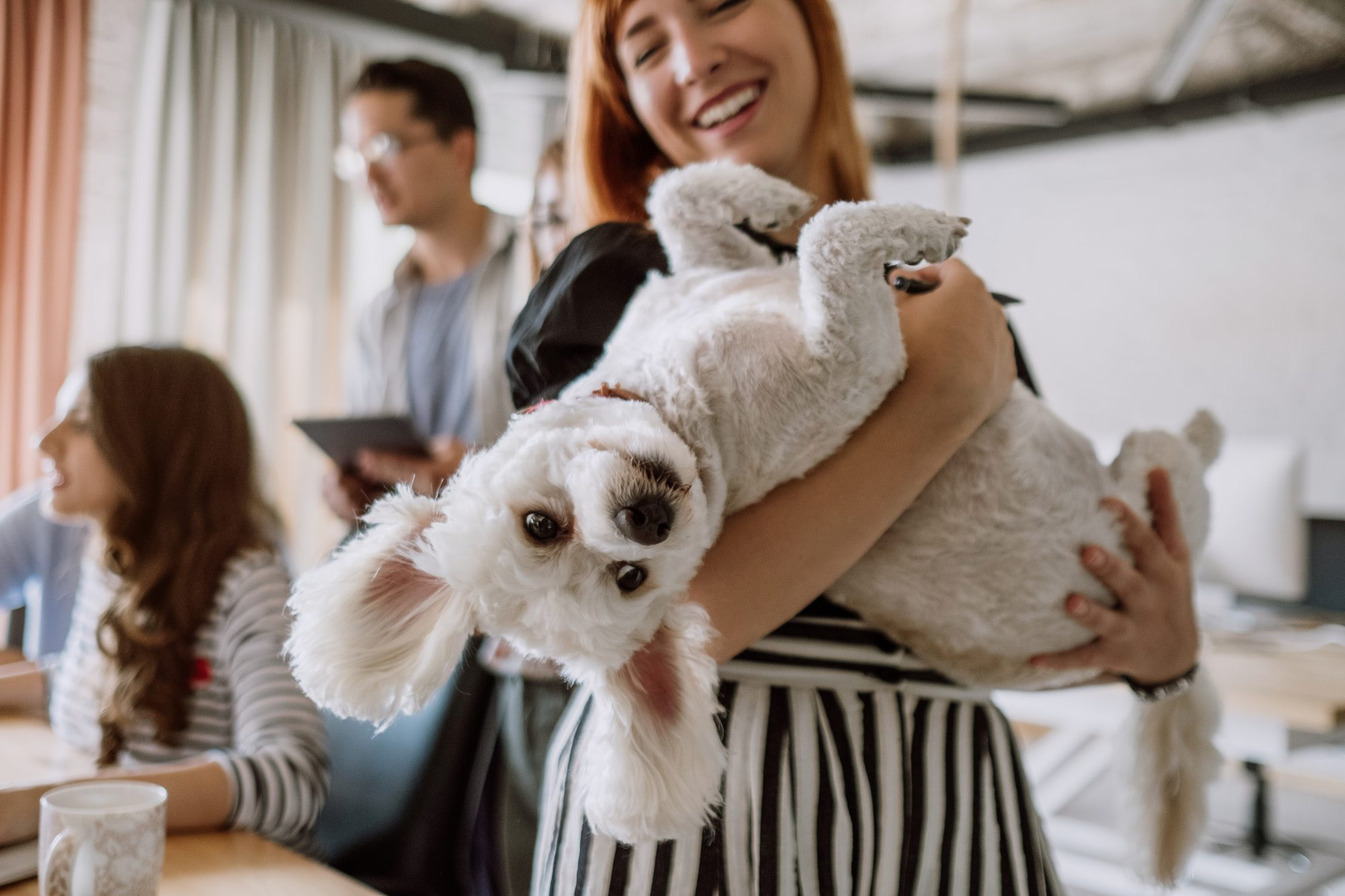 Smiling woman holds her dog in her arms in a office setting.